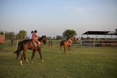 Horse-Riding-Zacky-Farms-10