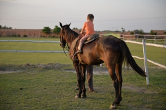 Horse-Riding-Zacky-Farms-12