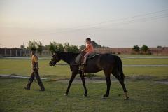 Horse-Riding-Zacky-Farms-14