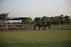 Horse-Riding-Zacky-Farms-3